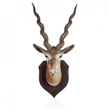 Wall Mounted Deer Head