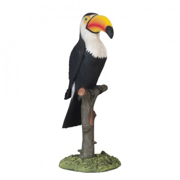 Large Toucan on Tree Stump
